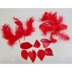Plumes rouges saint valentin