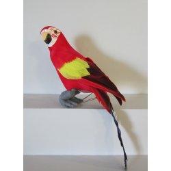 Perroquet 30 cm
